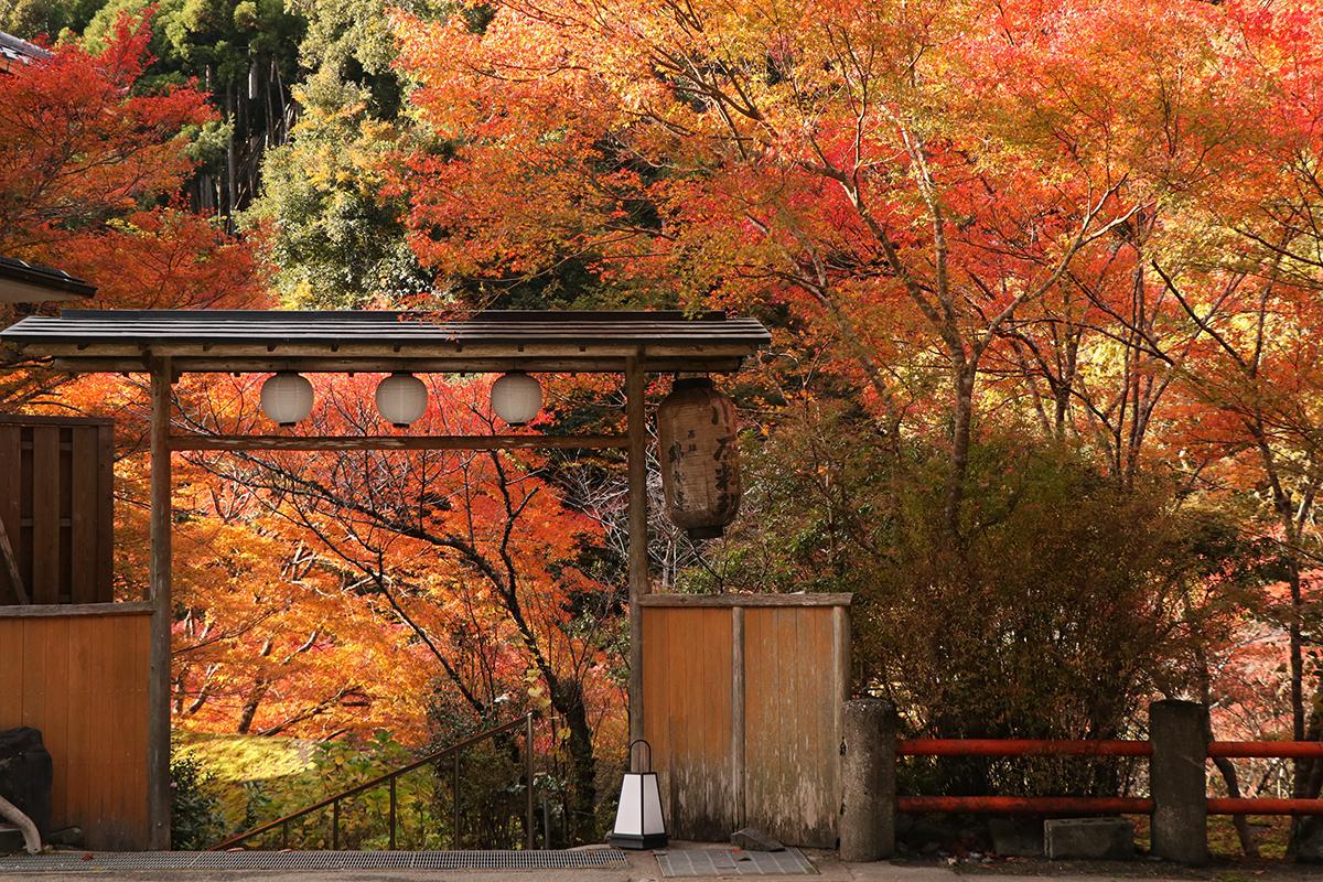 【京都】2019年楓況總整理